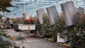 Rosen Erntewagen für Rohrschienen