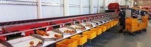tomaten-sorteerlijn-australie-steenks-service